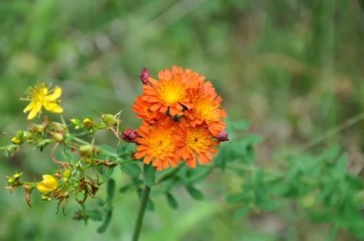 Flower Plant Blossom #89541