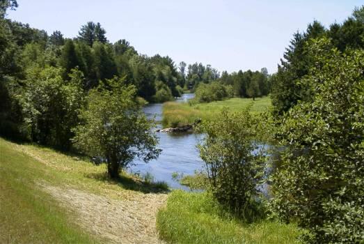 Landscape Forest Water #89584