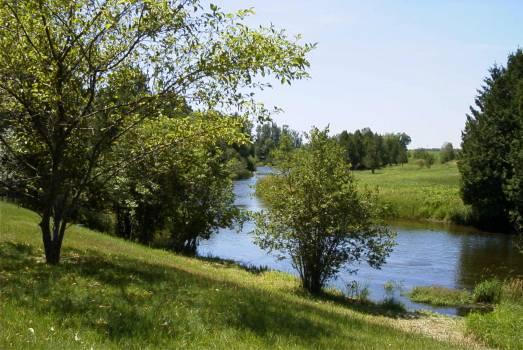 Tree Landscape Oak #89585