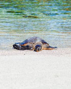 Sea turtle Leatherback turtle Turtle Free Photo