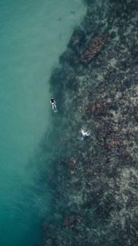 Dive Swimmer Sea Free Photo