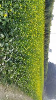My field #89950