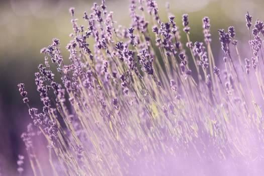 Aromatherapy aromatic beautiful flowers blooming Free Photo