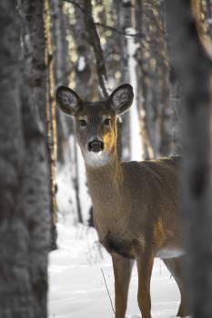 Forest pexels real deer trees #90134