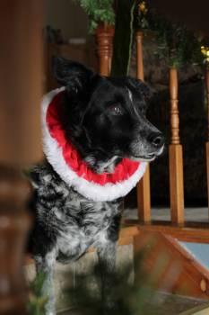 Dog Terrier Staffordshire bullterrier #90392