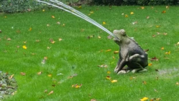 Frog fountain #90620
