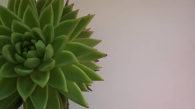 Converse all star flower flowerpot green Free Photo
