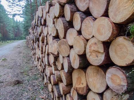 Cutting deforestration firewood forest #91021