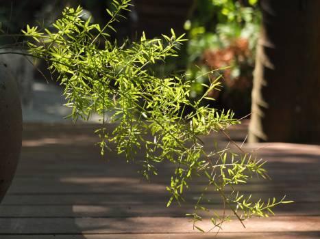 Beauty fern flower garden Free Photo