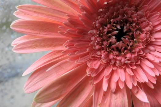 Flower macro nature pink #91506