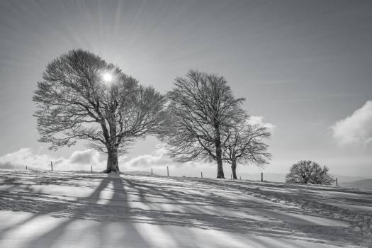 Black forest cold landscape lens flare Free Photo