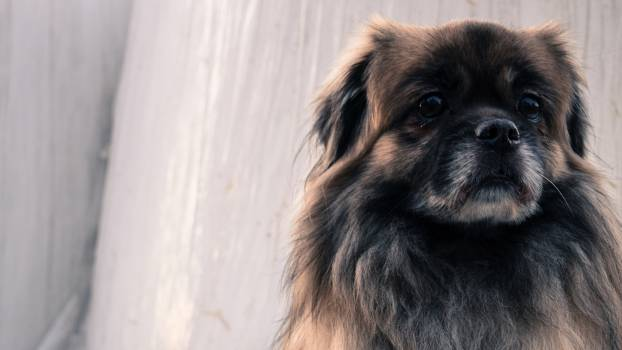 Close-up Portrait of Dog #92266