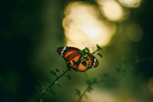 Butterfly green india Free Photo