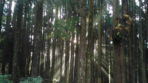 Fog forest light light and shadow Free Photo