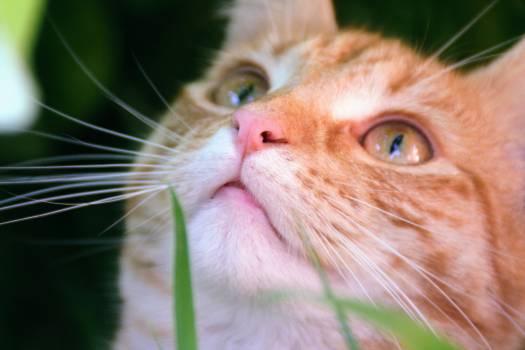 Feline Cat Kitten #92726