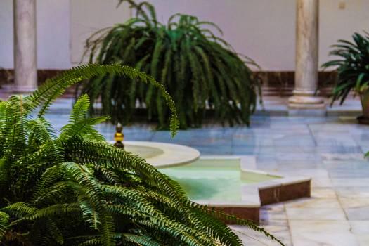 Plant Green Tree Free Photo