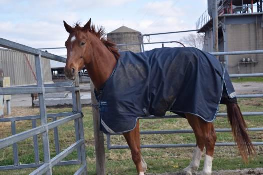 Horse Sorrel Equine #93259