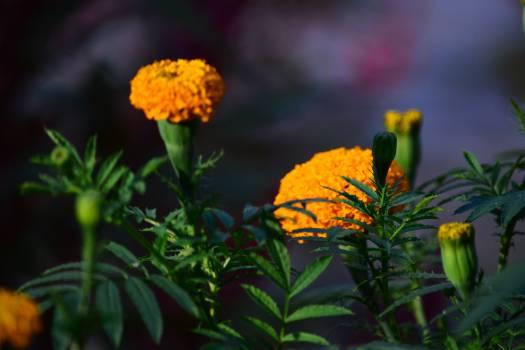 Sunflower Flower Yellow #93583