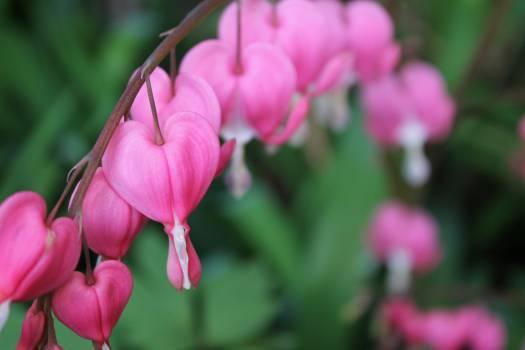 Flower pink #93636