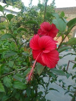 Flower Ornamental Plant Free Photo