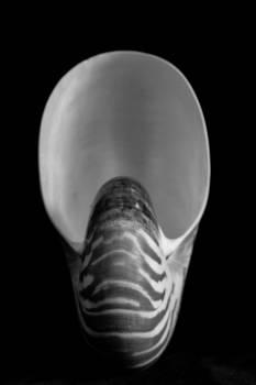 Chambered nautilus sea shell shell #93970