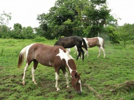 Horses Free Photo