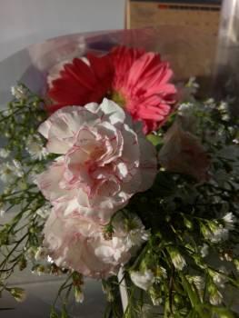 Rose Shrub Flower #94113
