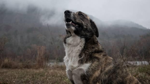 Adorable animal bark canine #94442