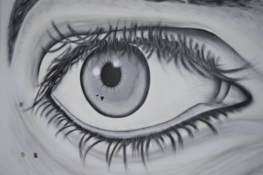 Eyebrow Lens Eyesight Free Photo