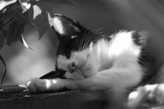 Meditation sleep #95139