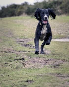 Animal canine dog grass #95902