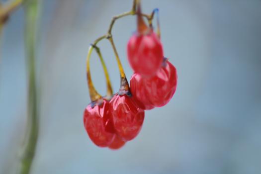 Berry Fruit Sweet Free Photo
