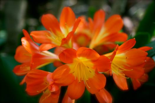 Flower nature orange plant Free Photo