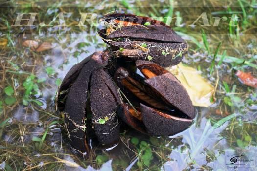Crab Rock crab Crustacean Free Photo