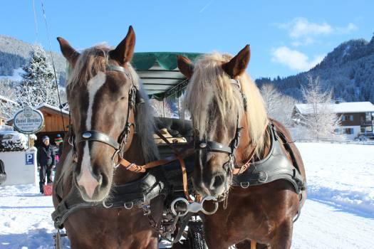 Horse Resort Animal Free Photo