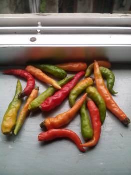 Chili green hd hot Free Photo