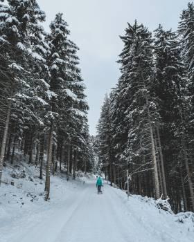 Snow Fir Weather #97201