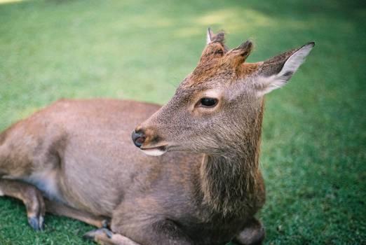 Deer Mammal Animal #97291