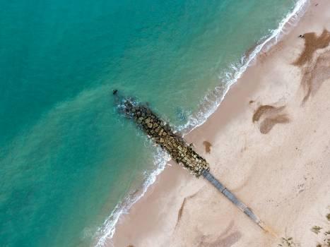 Snake Sea snake Water Free Photo