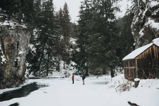 Cold conifer evergreen fir #97386