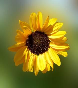 Beautiful bloom blossom bright #98677