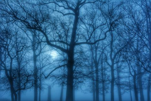 Blue ethereal fog foggy #98717
