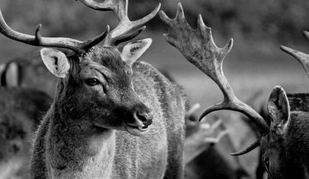 Animals deer fauna nature Free Photo