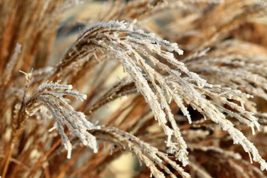Autumn close cold crystals Free Photo