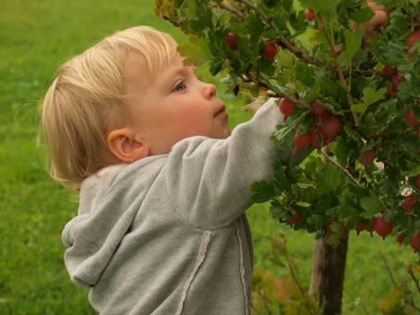 Berries bush food green Free Photo