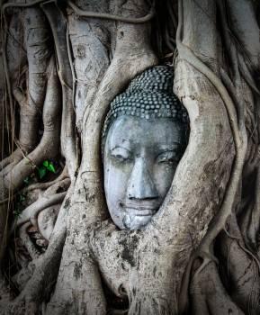 Asia buda buddha buddhism #99267