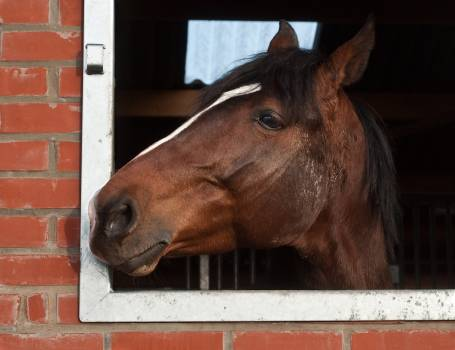 Animal head horse to watch Free Photo