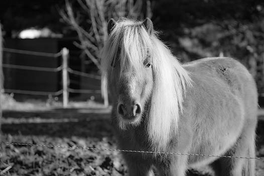 Animal animals equine eye Free Photo