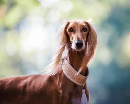 Animal beautiful cute dog Free Photo