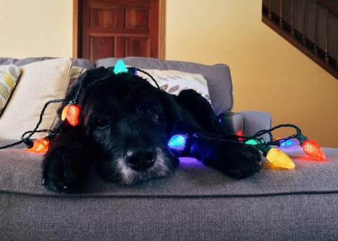 Christmas christmas dog dog holiday #99513